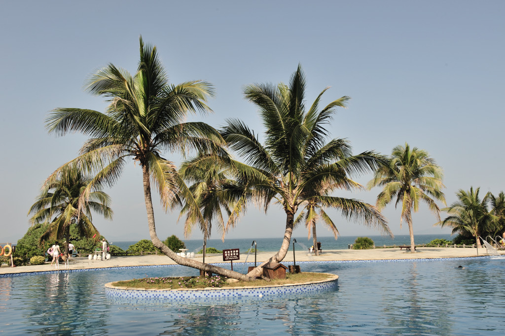 椰子树-种苗展示